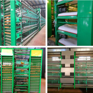 Layer battery cage in Livi Machinery are very automated.