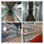 H type 3-tier broiler battery cage is very convenient.
