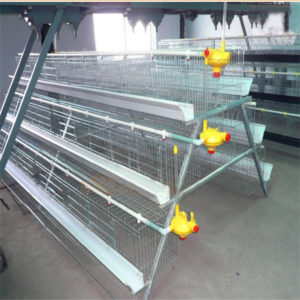 baby chicken battery cage is perfect cage system for chickens.