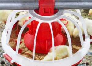 baby chicks feeding machine have the special design to meet chicken's feed standard.
