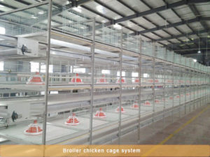 broiler battery cage with good feeding machine.