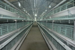chicken battery cage equipment have different tiers.