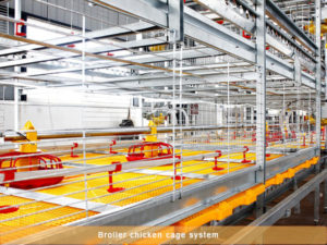 broiler battery cage can give you more benifits on your farm.