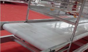 chicken manure removal system makes poultry farm more effective and convenient.