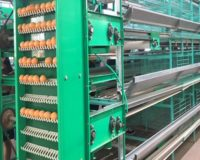 egg collection system is very important for egg processing equipment.