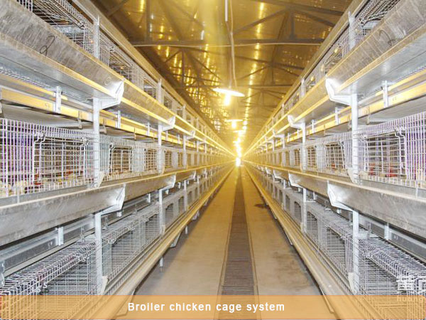 broiler battery cage system have good lighting machine.