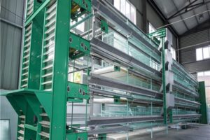 layer chickens cages system consists of layer chicken feeding system and layer drinking system.