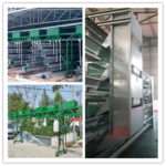 Poultry feeding system make the poultry farming convenient.