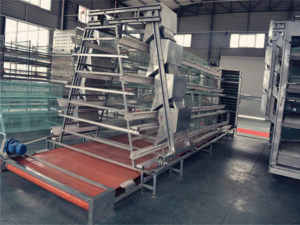 The poultry manure removal system can equipped with A-type chicken cage and H-type chicken cage system.