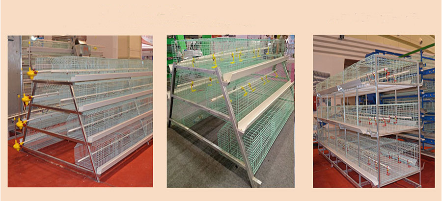 Baby chick cages are very important equipment for your poultry farming farms.