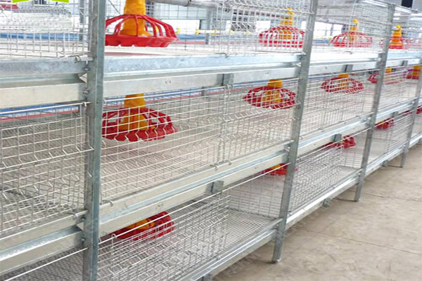 Poultry farming equipment also contains chicken brooder feedeing system.