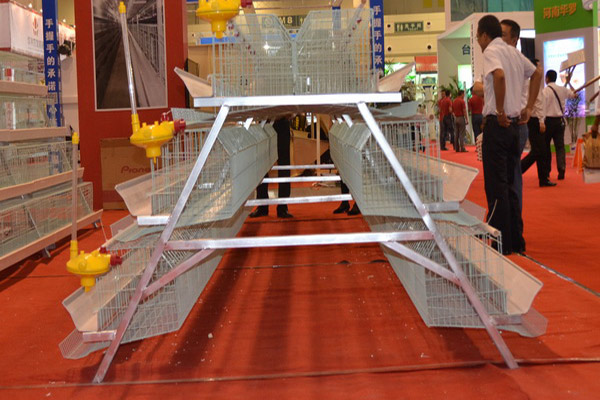 You choose suitable chicken brooder cage type and structures for your poultry farm.