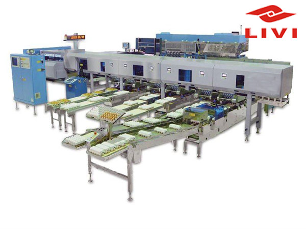Egg grading machine can help you grade eggs effectively.