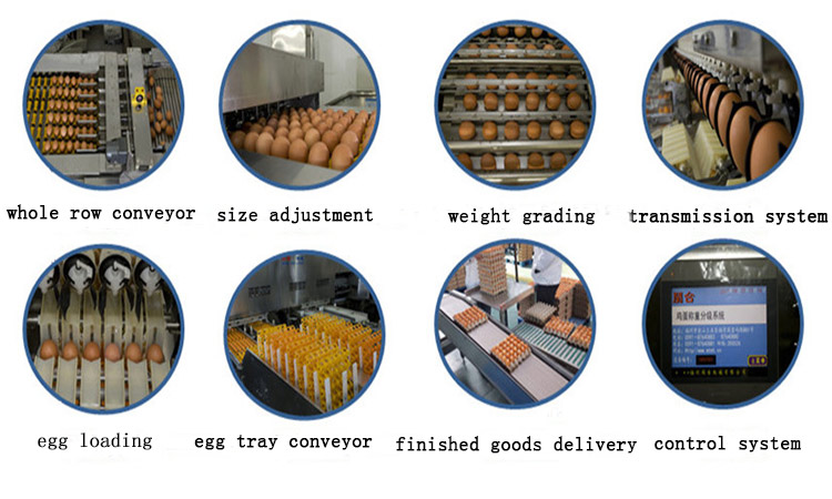 The detailed process can help your egg packing and grading evenly.
