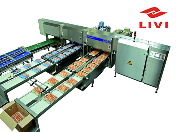Egg grading and packing machine are good quality in our Machinery.