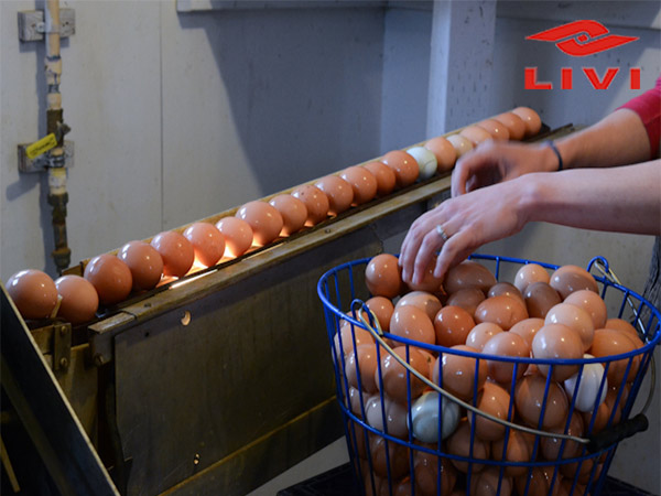 The egg washing machine can gently wash the eggs in a smooth speed.