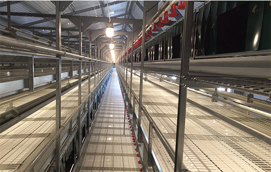 Broiler battery cage equipment are auitable for large scale breeding mode.