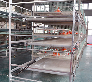 Broiler cages in Livi Mchinery are equipped with the poultry manure removal system.