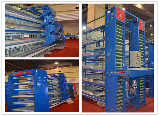 Chicken equipment for laying hens are automatic and have a reasonable price for our clients.