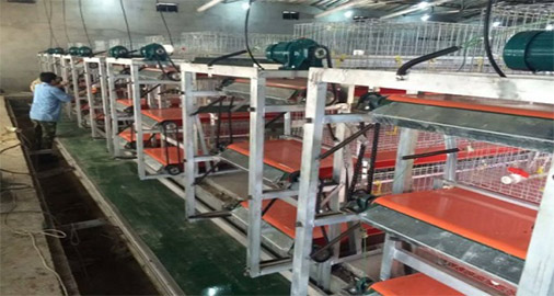 Chicken manure removal system can help you to manage your poultry farm ordely.