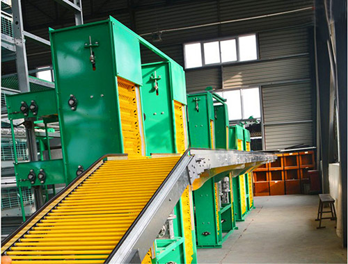 Automatic egg collecting machine matched with the battery hens can greatly promote the egg collecting efficiency.