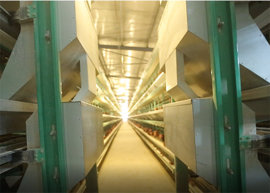 The even speed and automation features for chicken's farm are necessary equipment in modern poultry farm.