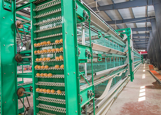 Your egg laying chicken cages can be equipped with the egg collection machine, which can bring much interests and convenience for you.