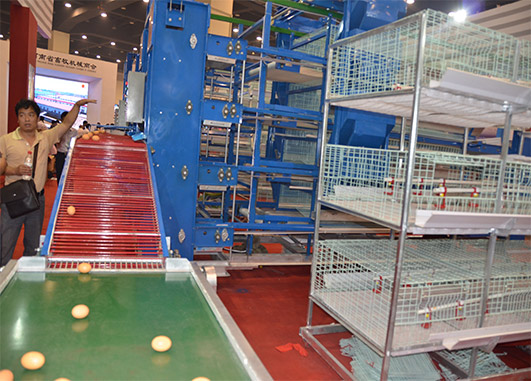 Livi Machinery equipped with aitomatic poultry farm equipment of automatic egg  collection machine are popular machines among our clients.