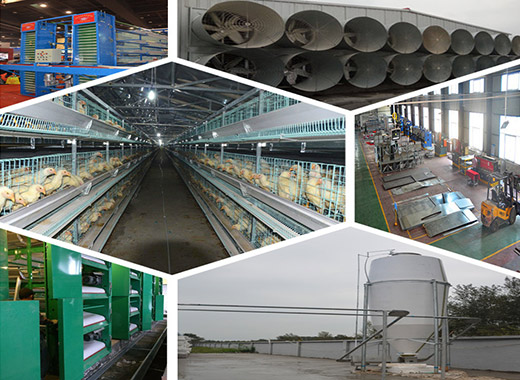 Chicken supplies are complete in Livi Machinery for your coop to choose.
