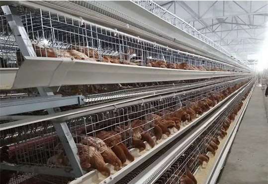 The economic benefits for ladder type chicken cage will be created mostly.