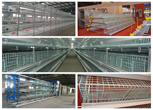 Livi Machinery equipped with full set of chicken cage system for your need.