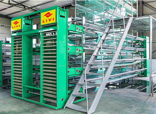 You can get enriched chicken cages for sale in Livi Mahcinery and get a perfect benefit from the egg laying chicken cages.