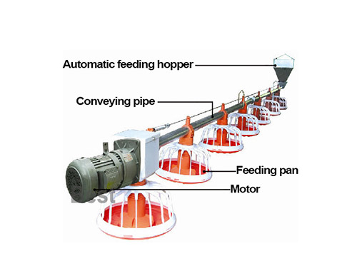 Chicken feeding lines for poultry supplies is an important equipment for broiler farm.