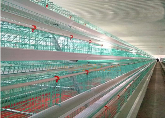 Chicken cages for sale in Livi Machinery can give you low cost investment for your poultry farms.