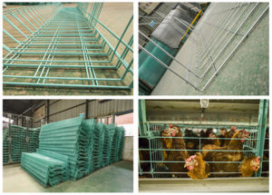 Livi Machinery adopts the best cage processing measuers to protect your chickens' body.