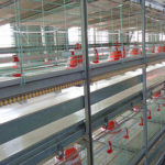 Automatic poultry farming equipment of broilers productions will meet the commercial broiler productions for poultry farmers.